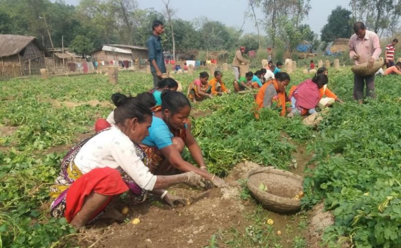 Bangladesh: New project will create potato processing facilities, empower women, hike income of contract farmers