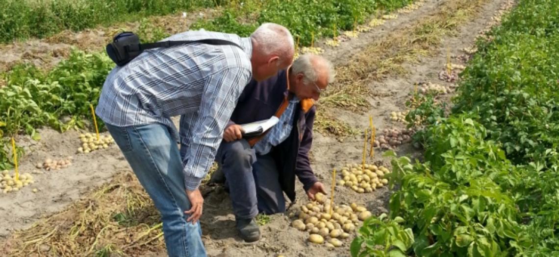 "Belgians prepare for ""stubbier"" fries – Potato News Today"