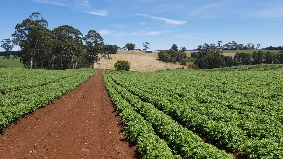 'Potato Production Solutions: A potato grower's guide. Crop Year 2019/20'